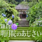 鎌倉明月院のあじさい見頃。2016開花状況。混雑時期とアクセス法