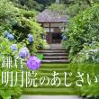 kamakura_meigetsuin_hydrangea_eyecatch
