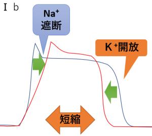 抗不整脈薬 1b 活動時間 Na K 短縮
