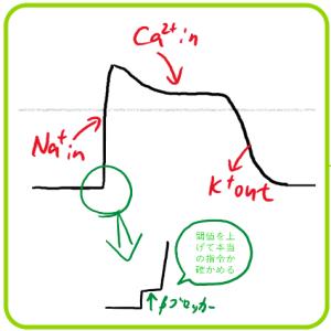 抗不整脈薬 クラス2 膜電位 ベータブロッカー