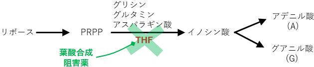 葉酸代謝 抗菌薬 DNA合成阻害薬