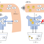 腎前性腎性違いマインドマップ