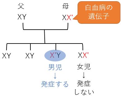 血友病 遺伝子 劣性遺伝 男 性染色体