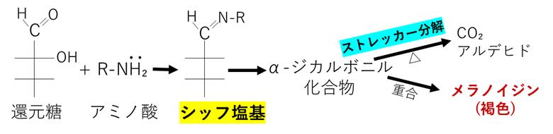 メイラード反応 ストレッカー分解 メラノイジン 違い 反応