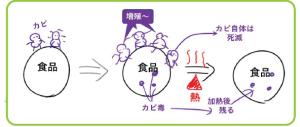 薬剤師国家試験 マインドマップ まとめ 図 衛生 食中毒 カビ毒 マイコトキシン ゴロ わかりやすい