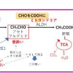 薬剤師国家試験 代謝 第Ⅰ相反応 脱ハロゲン化 腸内細菌 加水分解 アルコール代謝