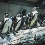 動物園・水族館の求人~飼育員になるために進むべき進路とは…