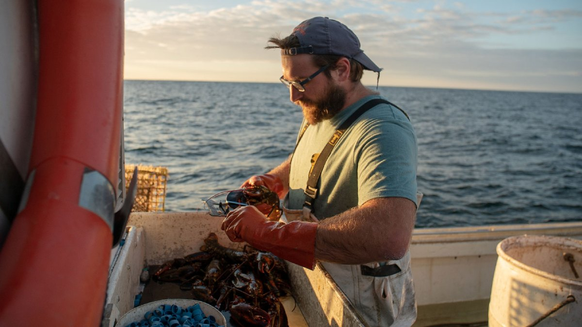 Andrew White holds lobsters with the ocean behind him.