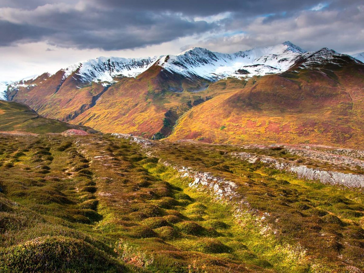 Field of hummocks in Denali