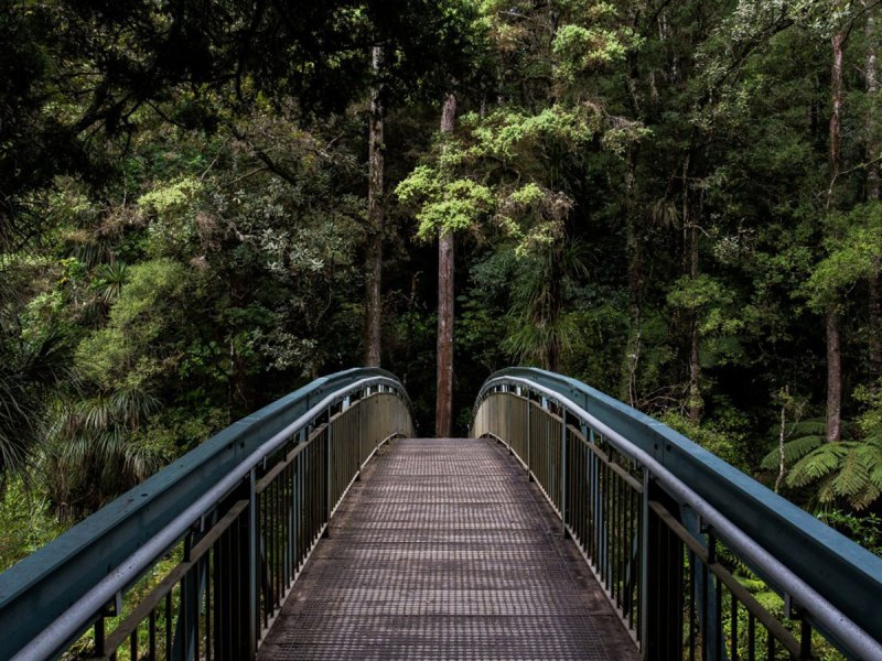 A bridge in a forest.