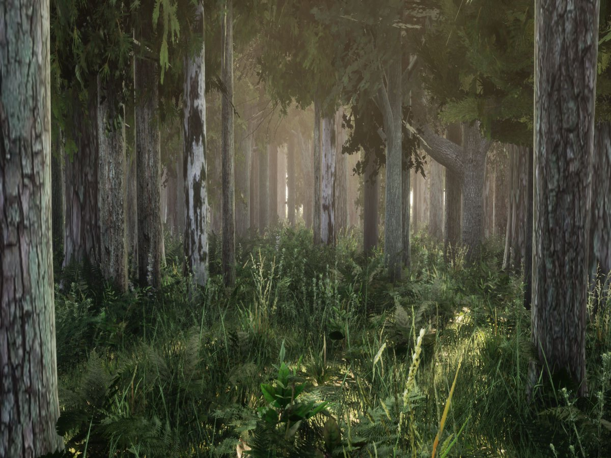 Virtual reality forest
