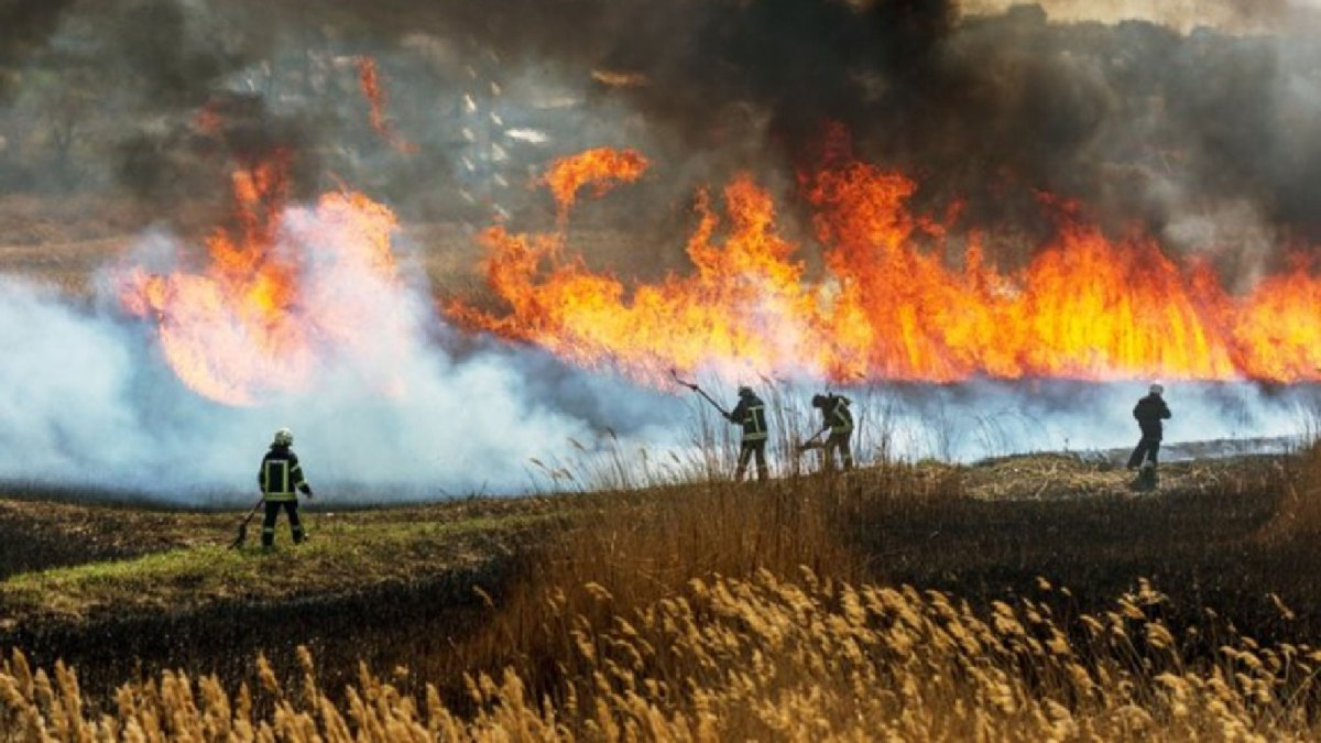 Fire fighters fight a wildfire.