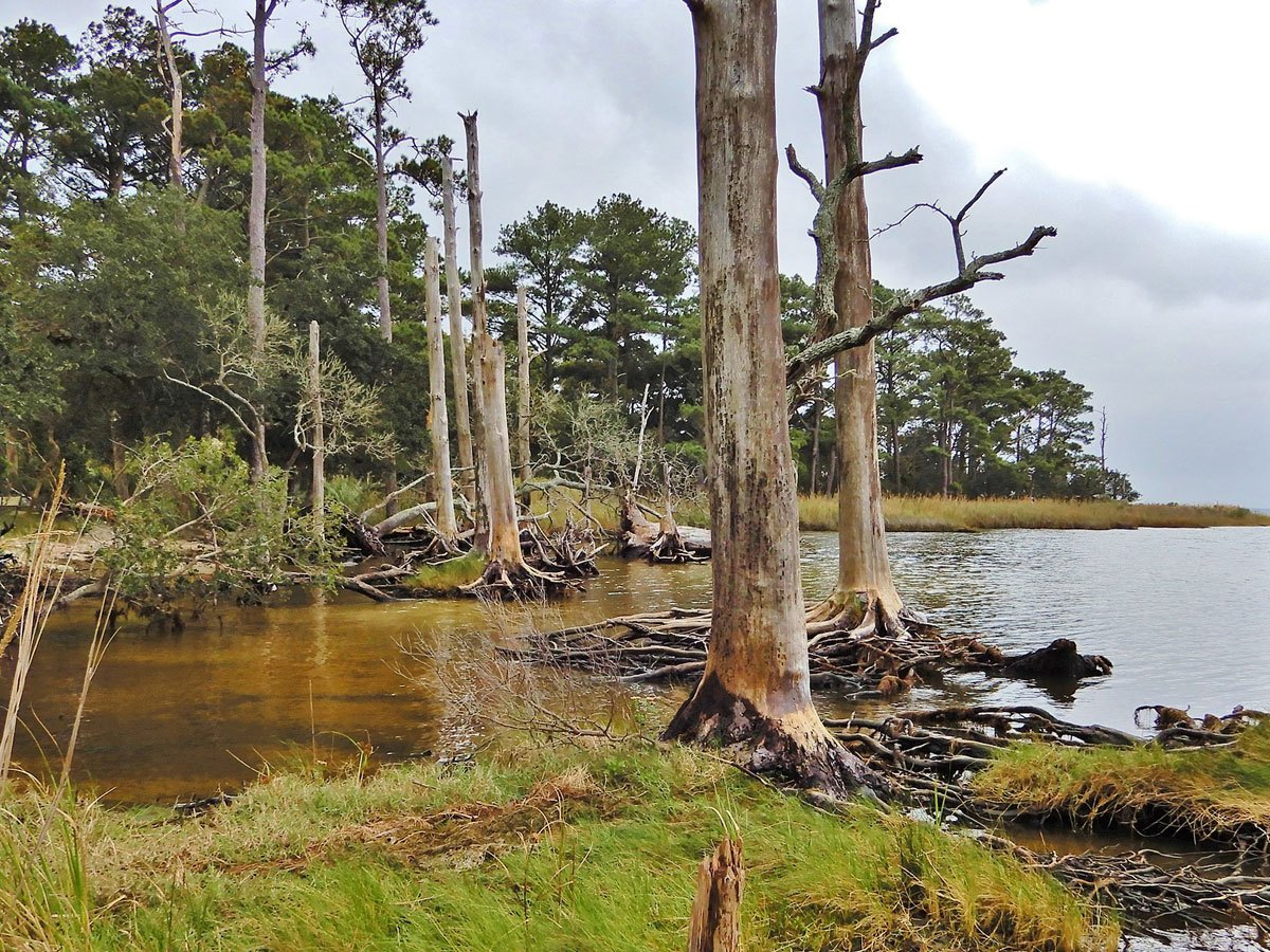 Ghost forest at Nags Head