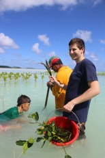 Planting mangroves at Funafala island