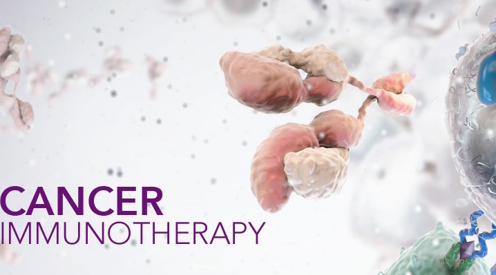 Image result for immunotherapy images