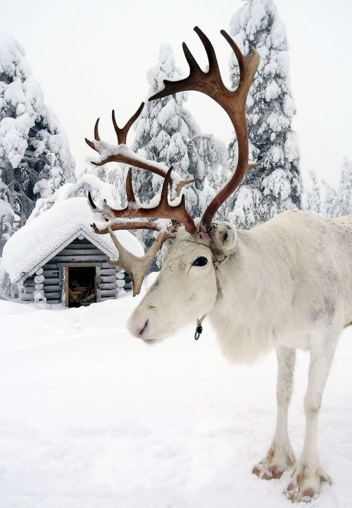 northern-lights-photography-finland-111-584e923dd2e2d__880