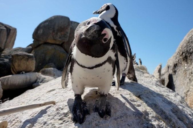 pinguino-1200x800