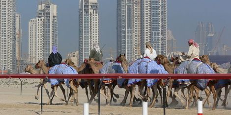 Dubai_camel_race