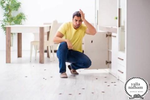 تفسير حلم الصراصير في البيت