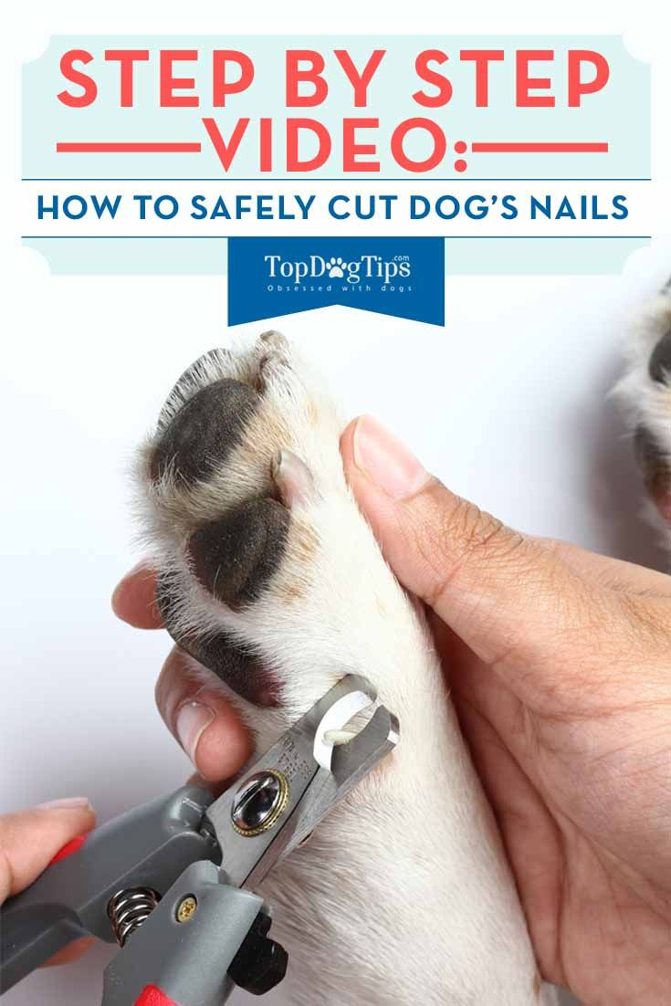 How to cut dogs nails 101 a step by step video guide if
