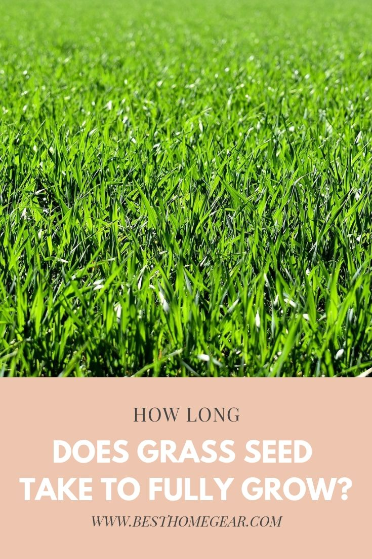 How long does grass seed take to fully grow grass seed