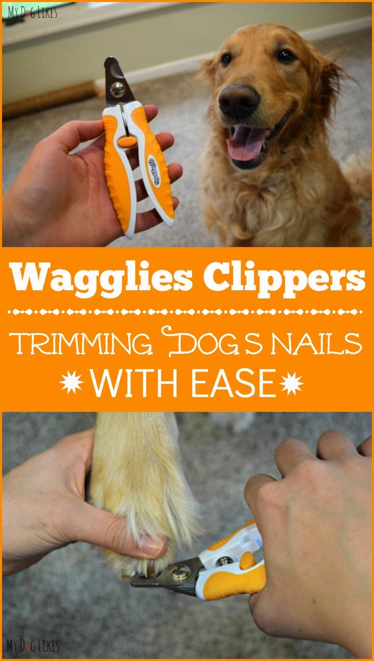 how to cut puppy nails with nail clippers