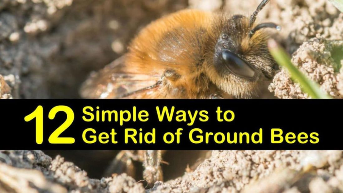 how to kill ground bees with dish soap