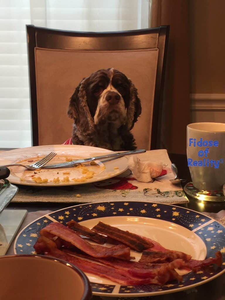 How to help a dog with pancreatitis health diet dogs