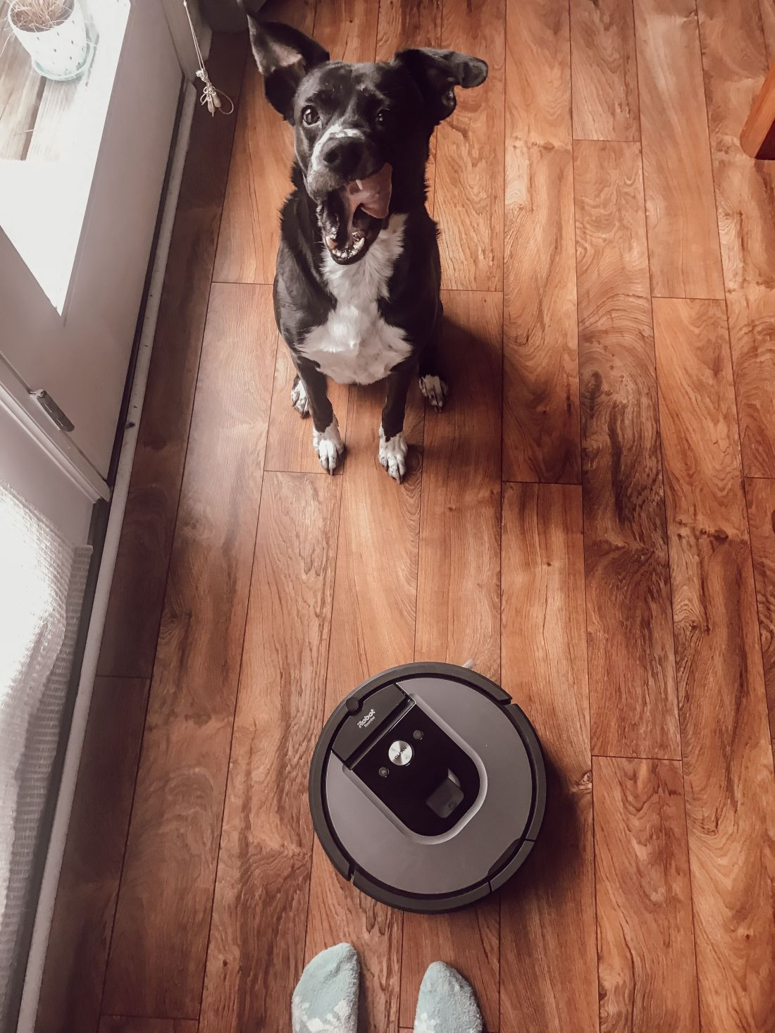 Our roomba 960 review roomba cleaning equipment