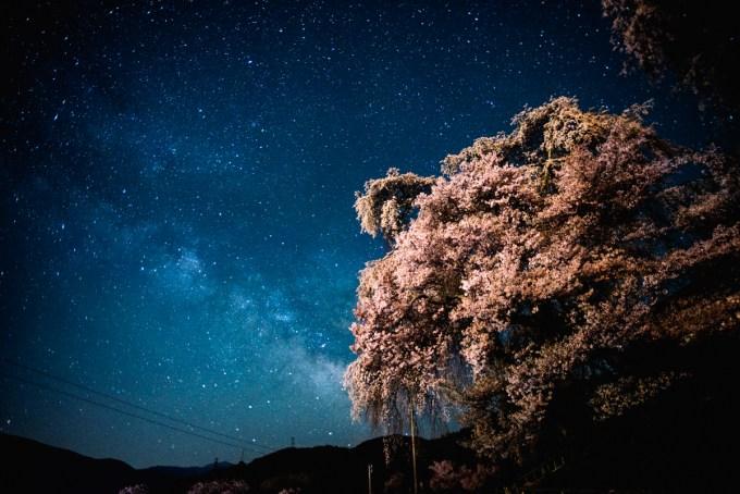 高遠勝間の枝垂れ桜と合わせて撮った天の川の写真