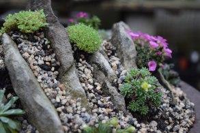 Crevice garden 04