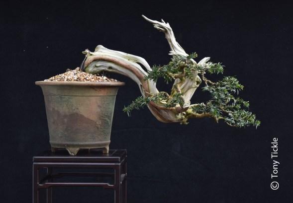 Han Kengai yew 1500