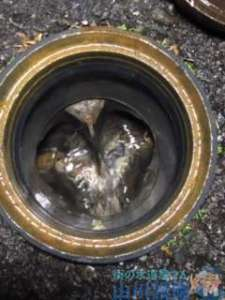 大阪府東大阪市六万寺町  トイレつまり修理  排水管つまり修理  高圧洗浄機