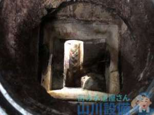 排水管の定期清掃を高圧洗浄機と管内カメラを使って出来る業者