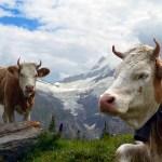 スイス旅行に行く前にこれだけは知っておきたい!現地で困らない為の心得と素朴な疑問