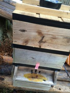ニホンミツバチ巣箱 捕獲