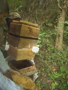 ニホンミツバチ重箱式巣箱