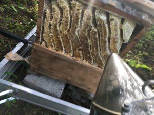 ニホンミツバチの蜂蜜
