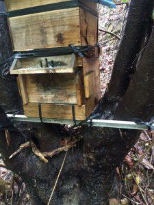 日本蜜蜂巣箱