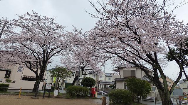 160404Mon-1 我が家の散歩道 (8)