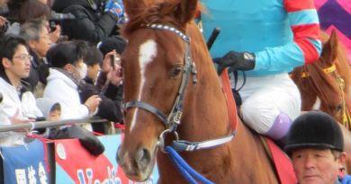 2013 東海S ヤマニンキングリー