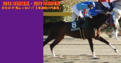 2018年の活躍馬