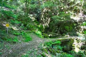 保安林石の橋長門峡