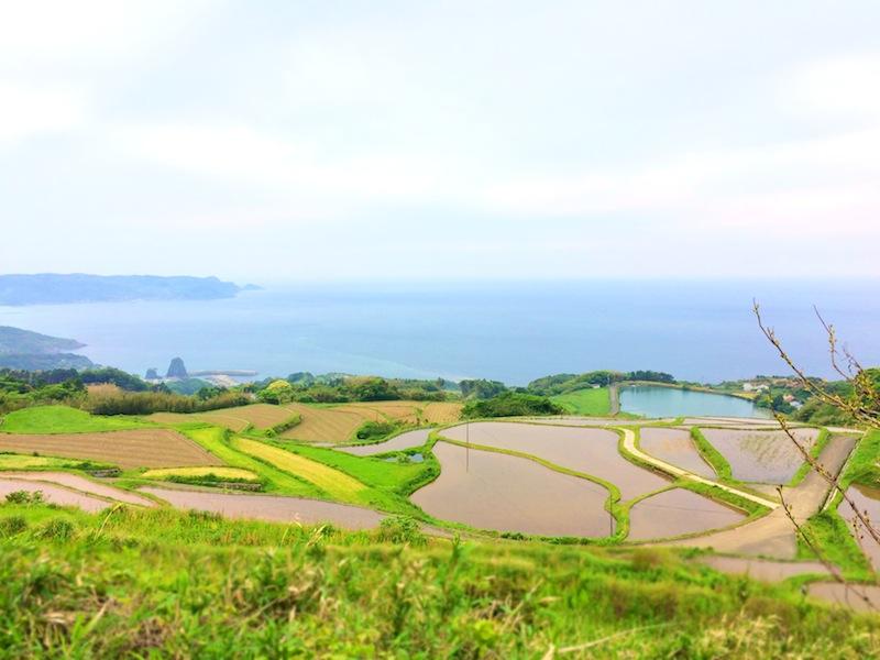 日本棚田百選「東後畑の棚田」とカフェ
