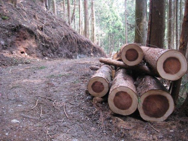 森林作業道#12( 道幅 2.5m ) | やまさ育林