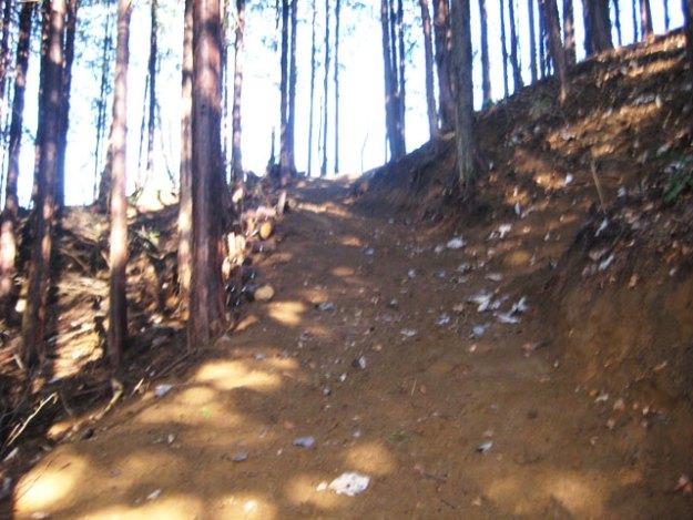 森林作業道作設#13( 道幅2.5m )施業後 | やまさ育林