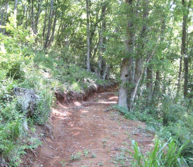 スギ林から材を搬出する為に、広葉樹林での森林作業道作設( 施業後 )| やまさ育林