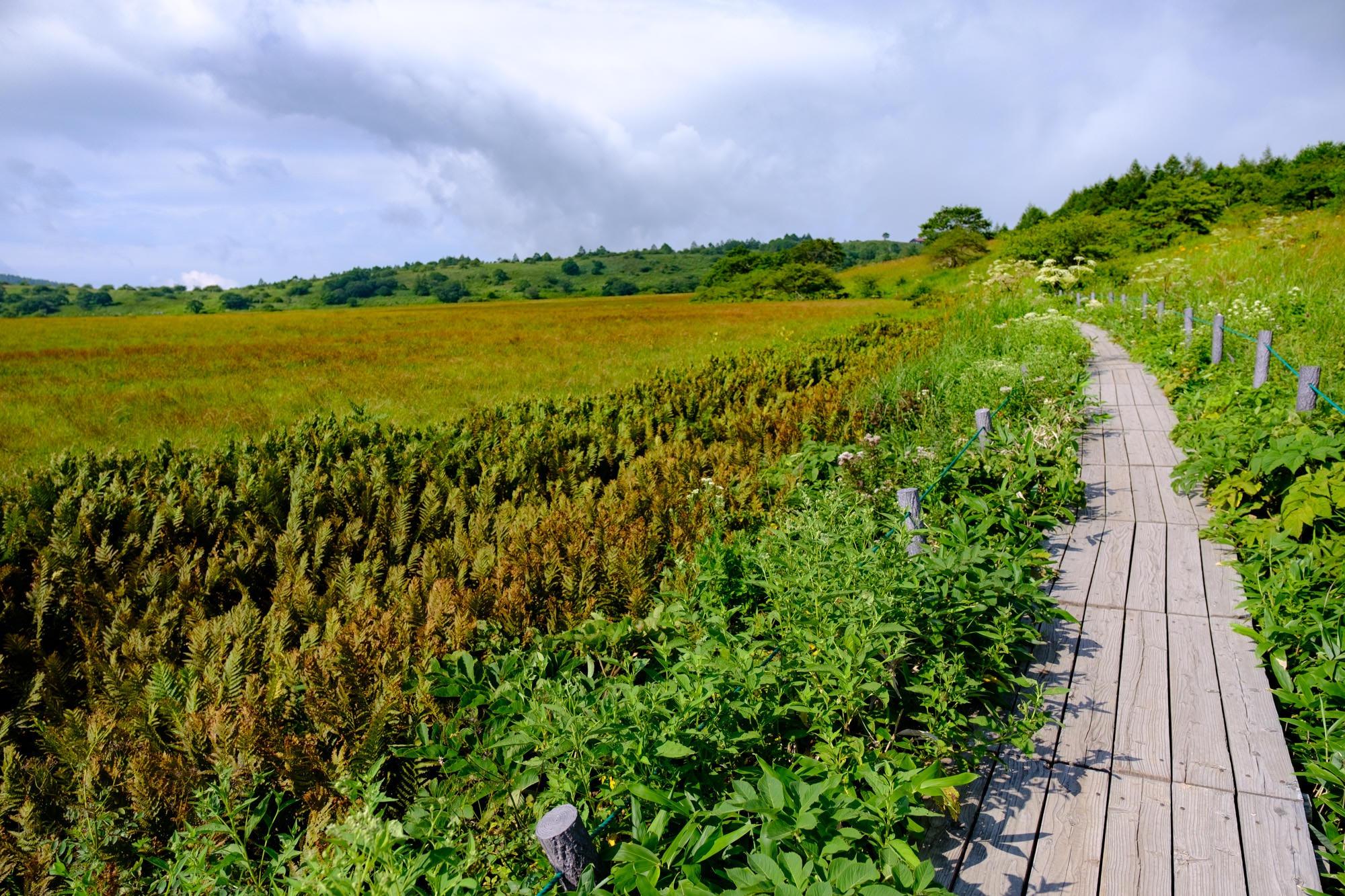 八島湿原の遊歩道