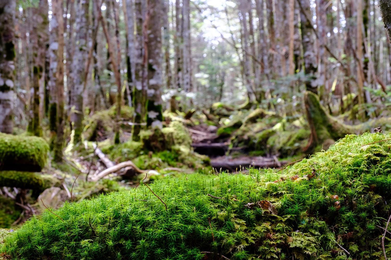 白駒の森の中を歩く