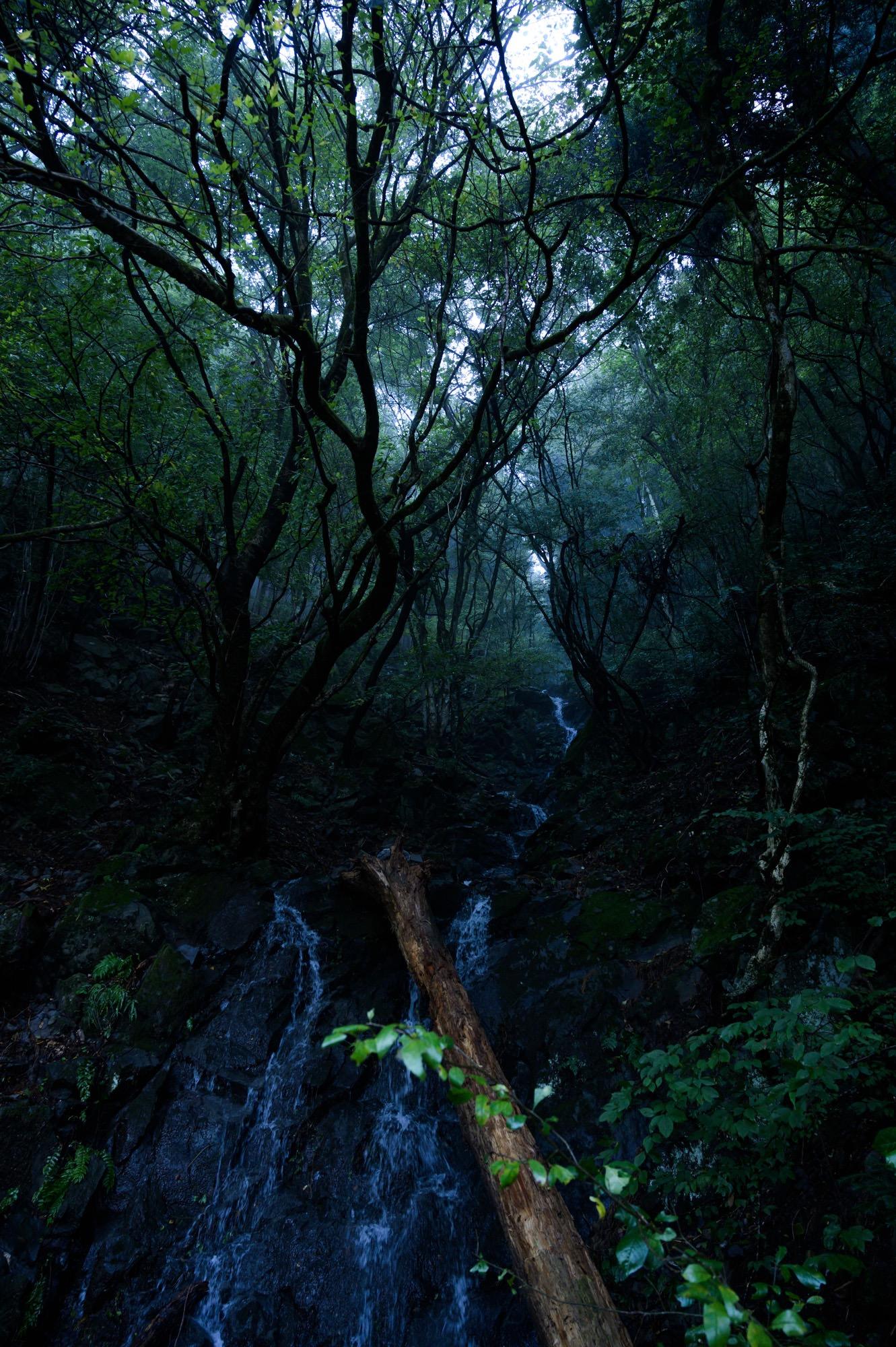 木と水の流れ
